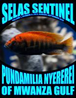 SELAS_Sentinel_1.3